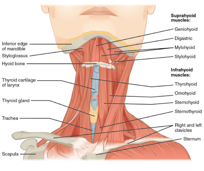 muscular-tension-dysphonia